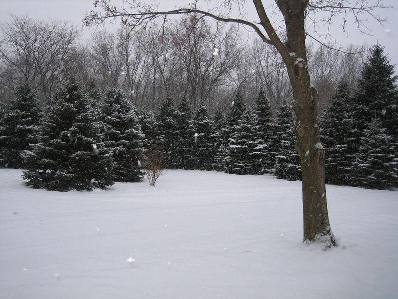Dec.25th 200927